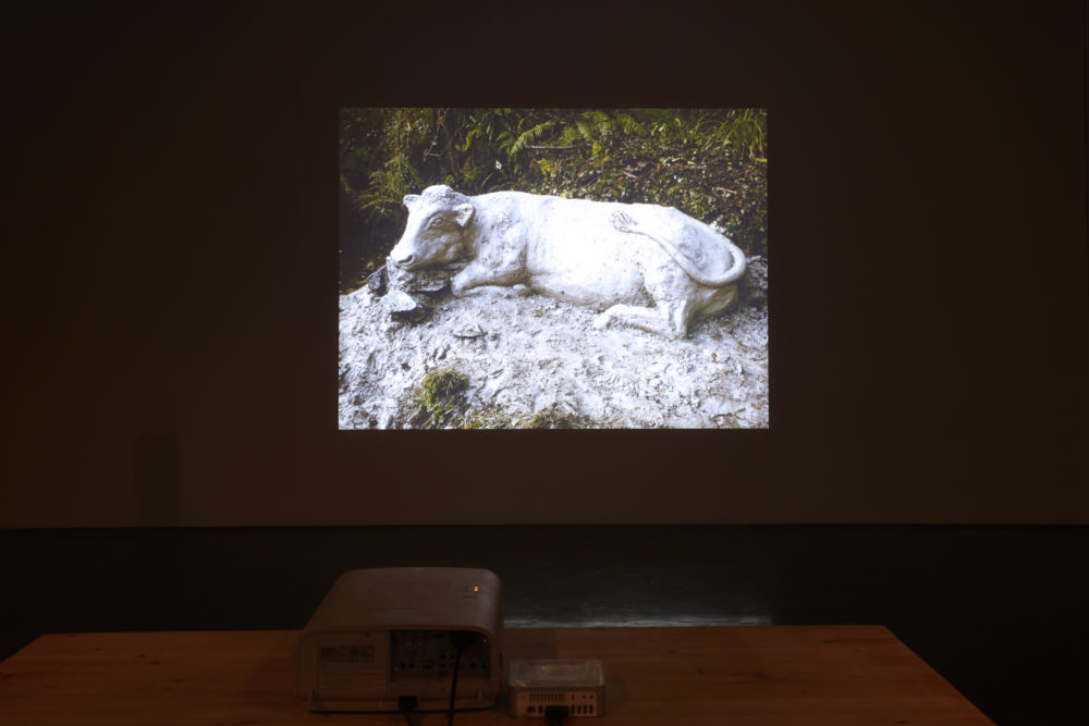Installation view of Crêpe Suzette, (2012). A projection of an outdoor sculpture of a cow.