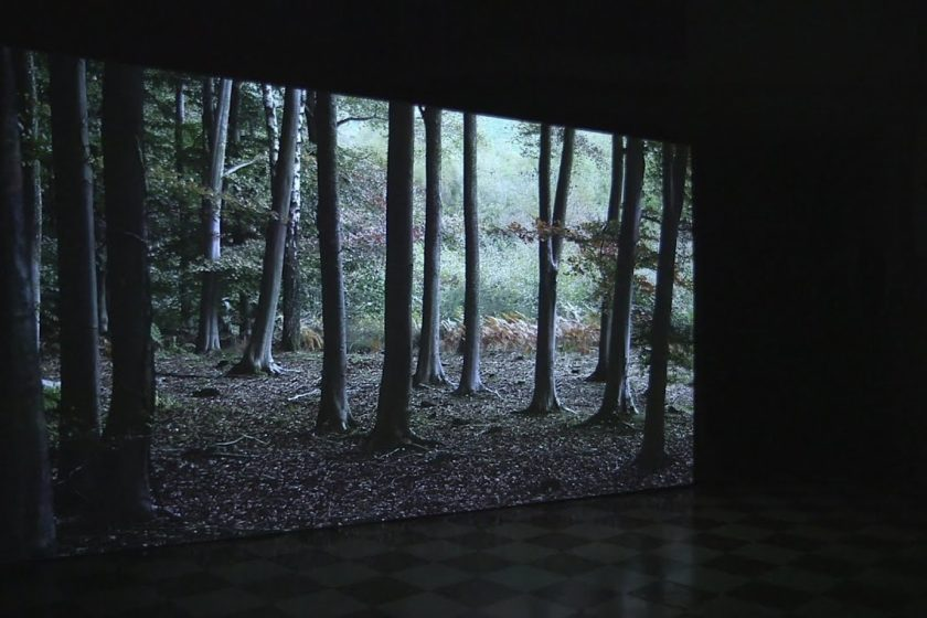 Installation shot: A screen shows an image of a trees in a woodland.