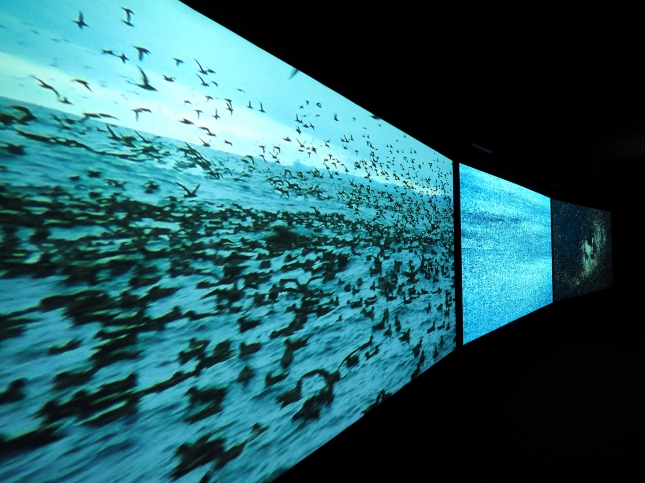 Installation shot: Three screens are showing sea birds gathering in their masses on water.
